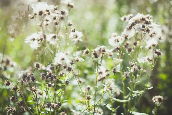 Wildpflanzen – Von der Wiese auf den Teller